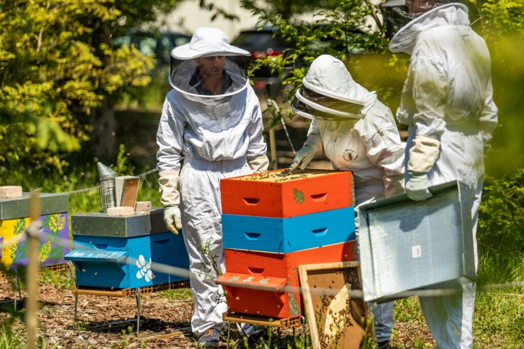 atmbees les salariés d'ATMB font leur miel avec 4 ruches