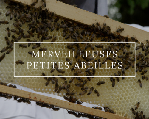 Merveilleuses petites abeilles