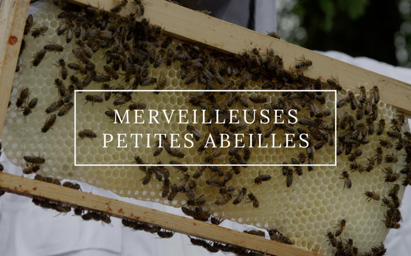 Image pour Merveilleuses petites abeilles